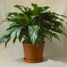 Houseplants That Purify the Air in Your Home