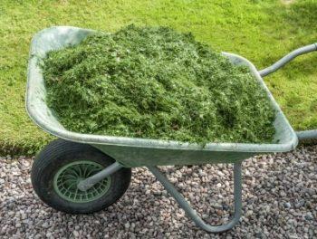 DIY Fertilizers for Your Garden