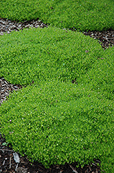 The Best Ground Cover for Your Yard