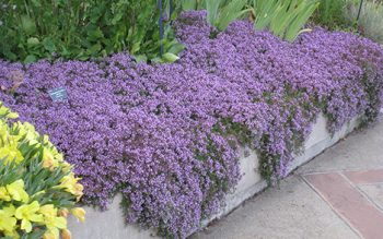 The Best Ground Covers for Your Yard