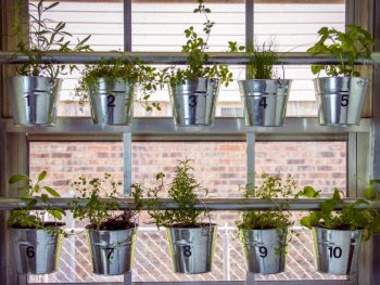 Trendy Ways to Display Your Indoor Herb Garden